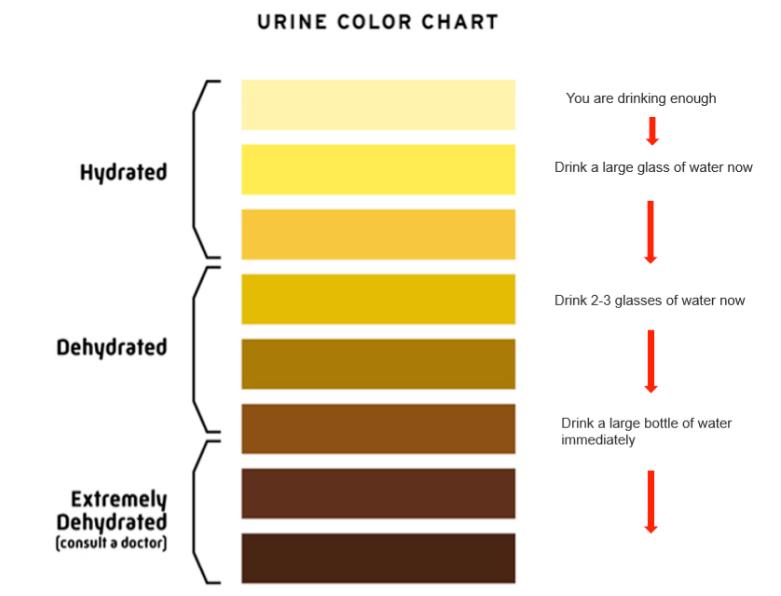 urinecolourchart